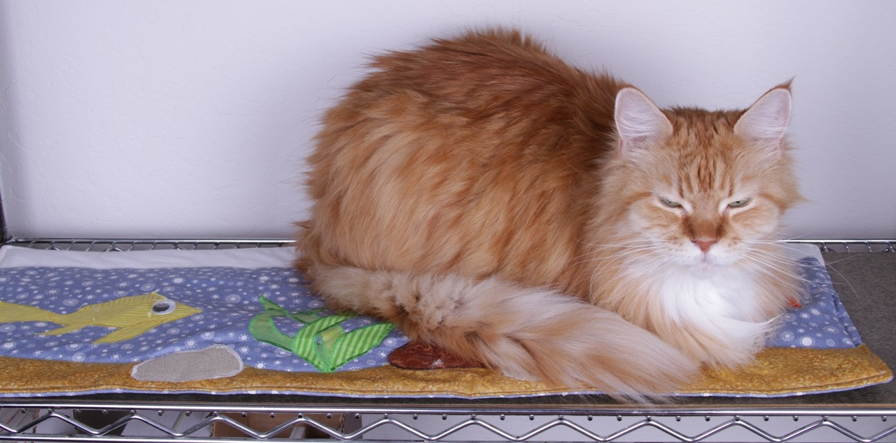 Pets quilted accessories by Lenore Edman on Flickr